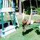 Image 8: Beyonce and Blue Ivy Swing